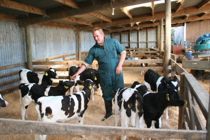 Dairy product prices rebound from five-year low