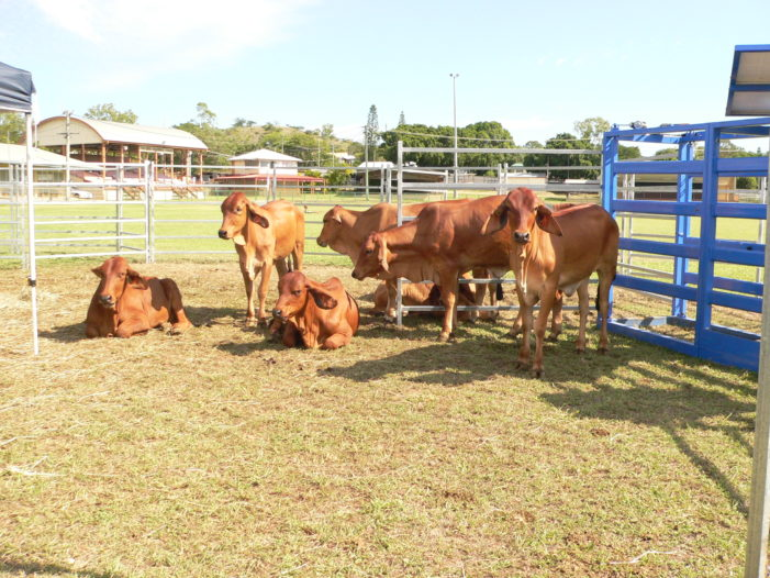 Charters Towers Beef Expo to become a regular event