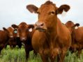 TB-free progress means fewer tests for some farmers