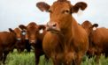 Agrigate to revolutionise farm performance