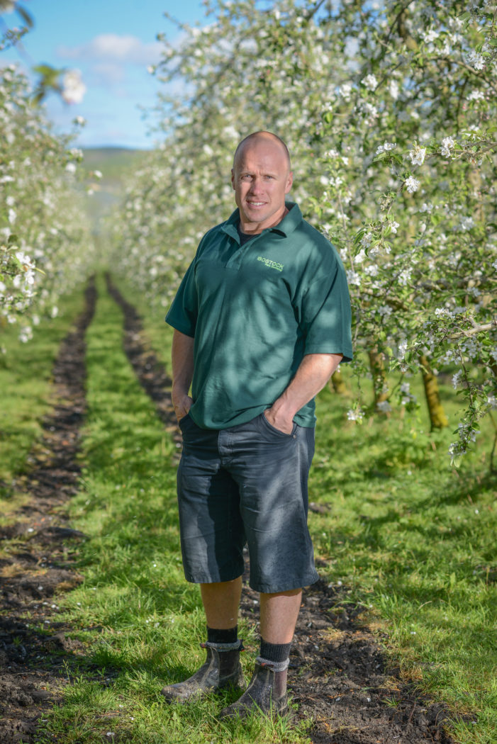 Record blossoms set New Zealand up for bumper apple crop