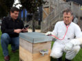 Hivemind crowdfunds affordable bee surveillance technology